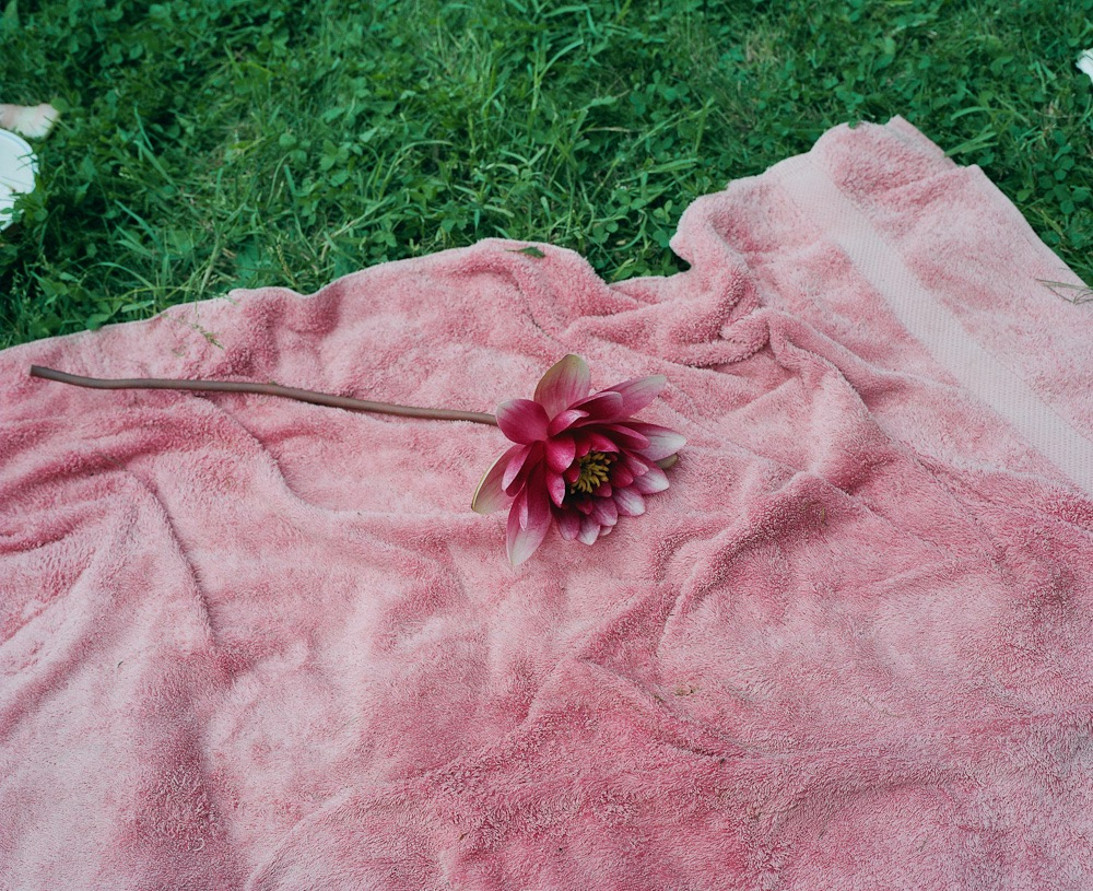 flower on grass by maxyme g delisle