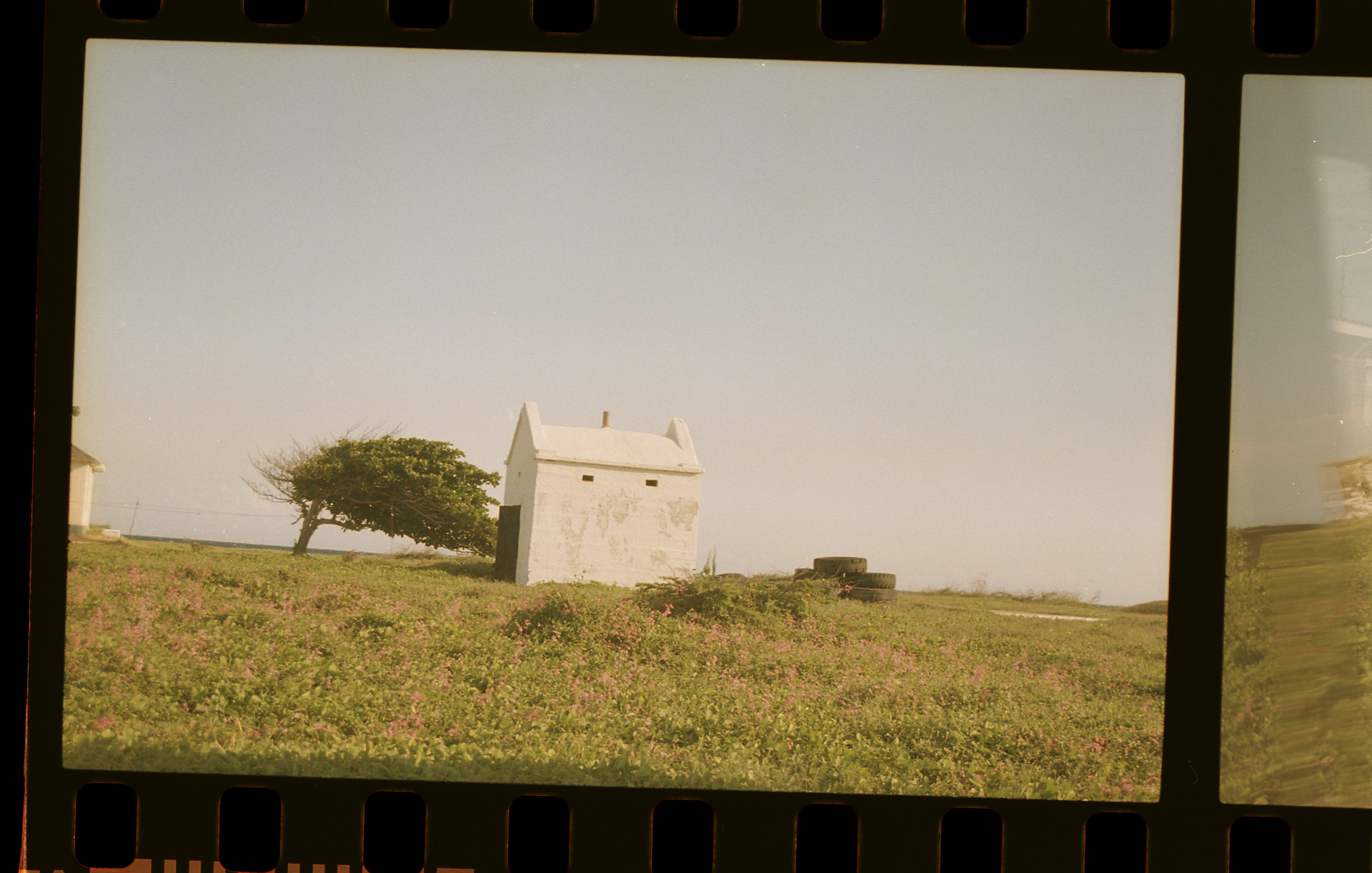 picture of white simple house in field with tree next to it by Oumayma B Tanfous in Jamaica