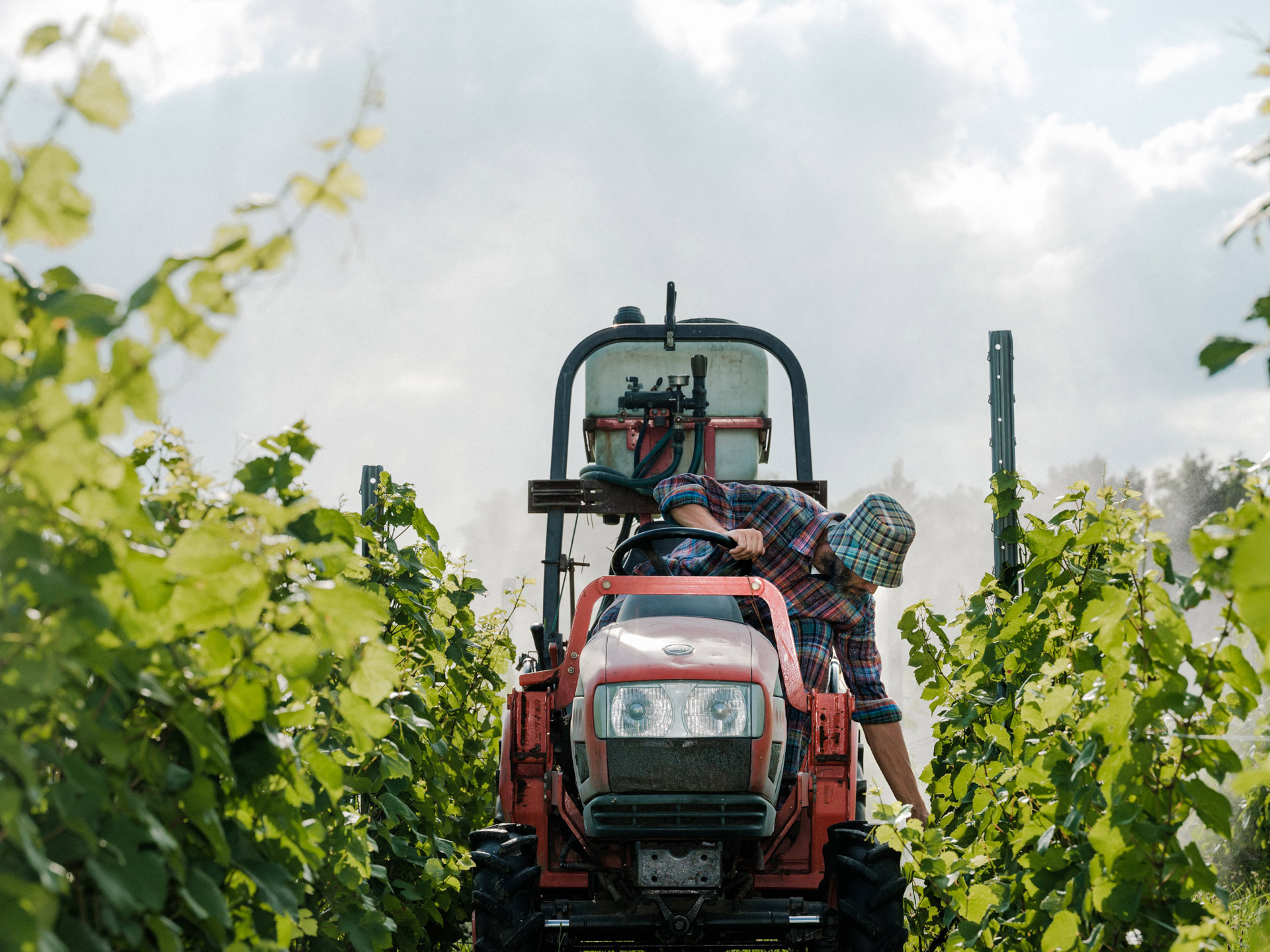 winemaker from Pinard & Filles driving his tractor and picking up grapes by Alexi Hobbs for Larose Paris