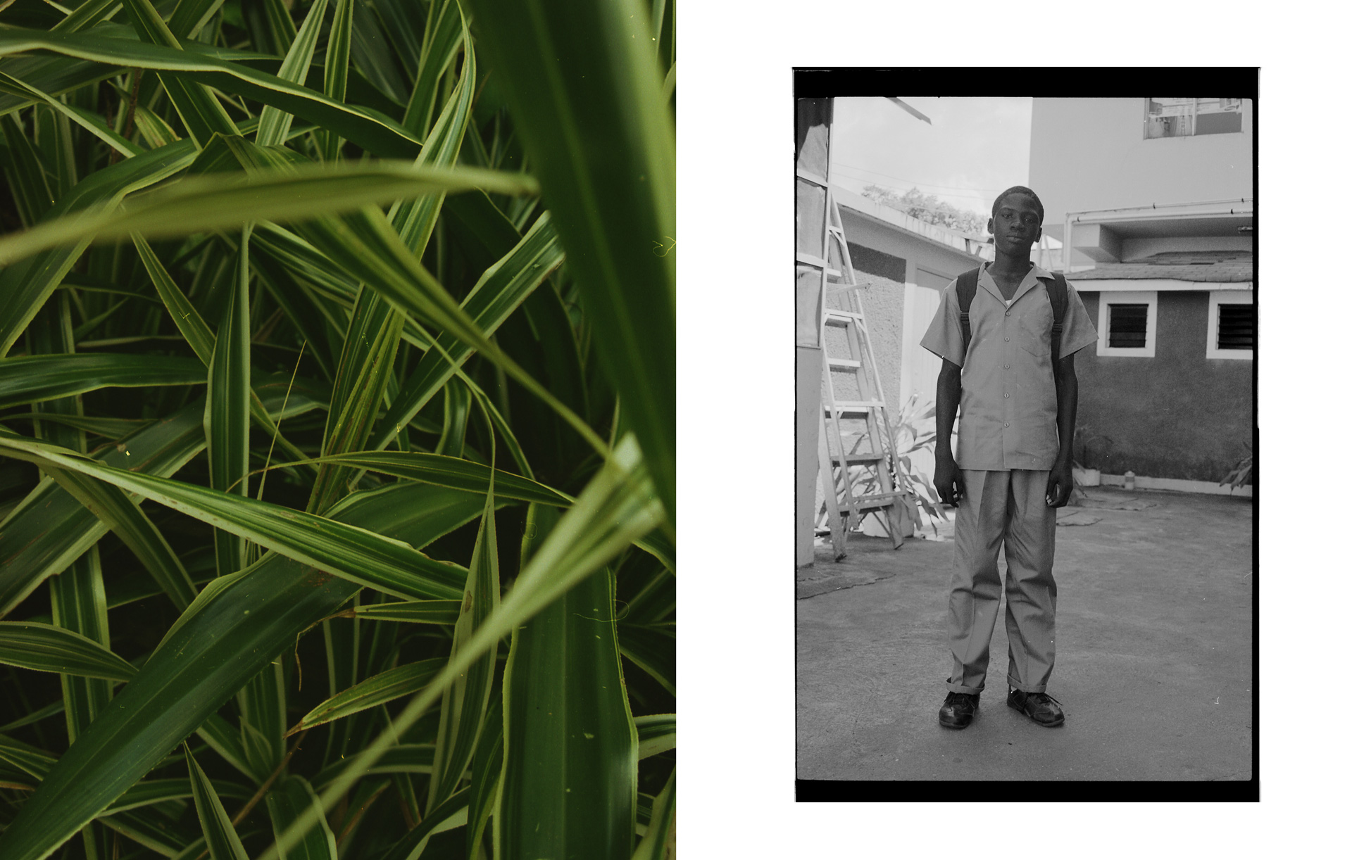 montage of tropical leaves with picture of young jamaican boy in school uniform with his backpack looking at camera by Oumayma B Tanfous in Jamaica